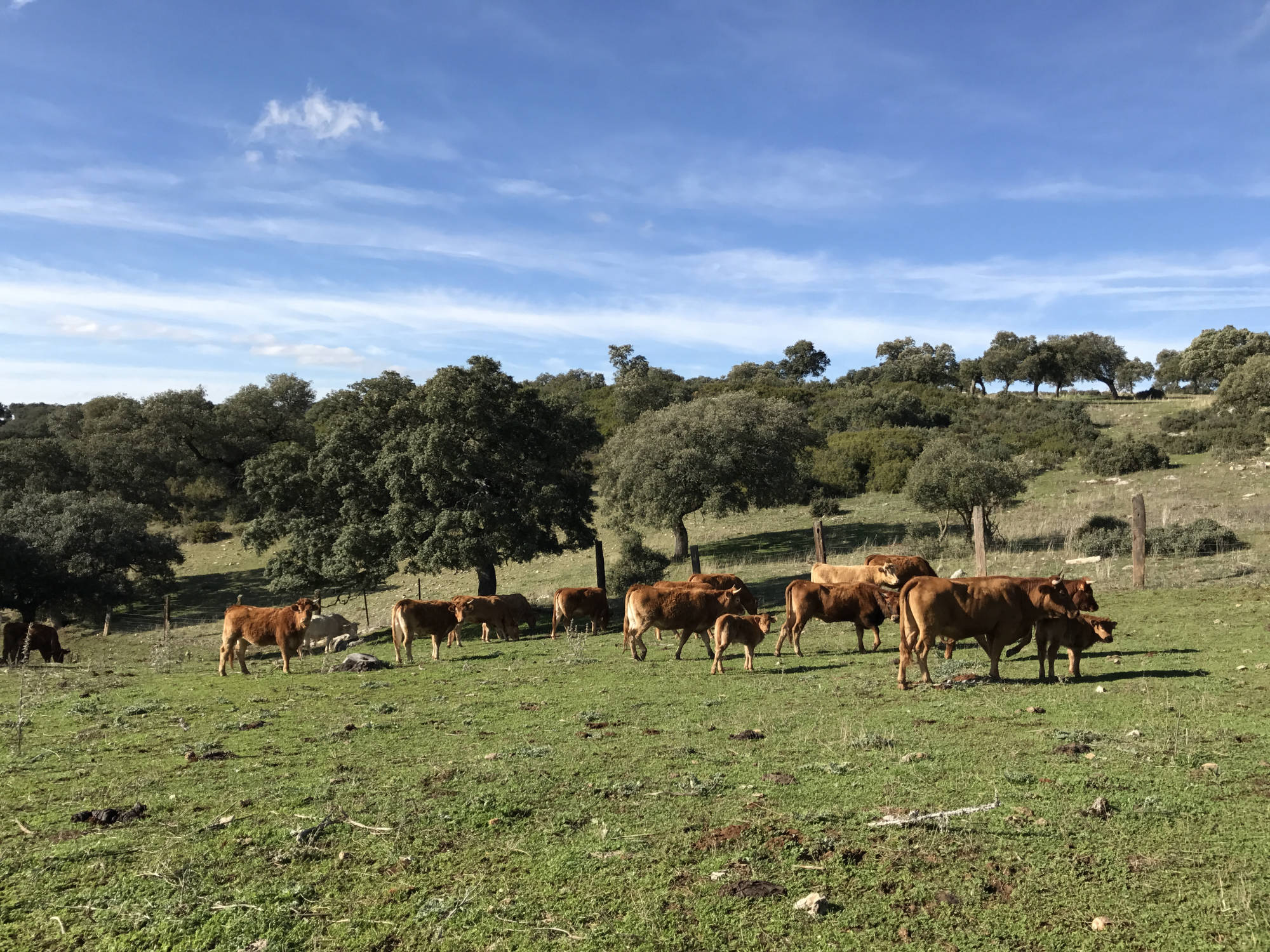 vacas-cria-2000x1500