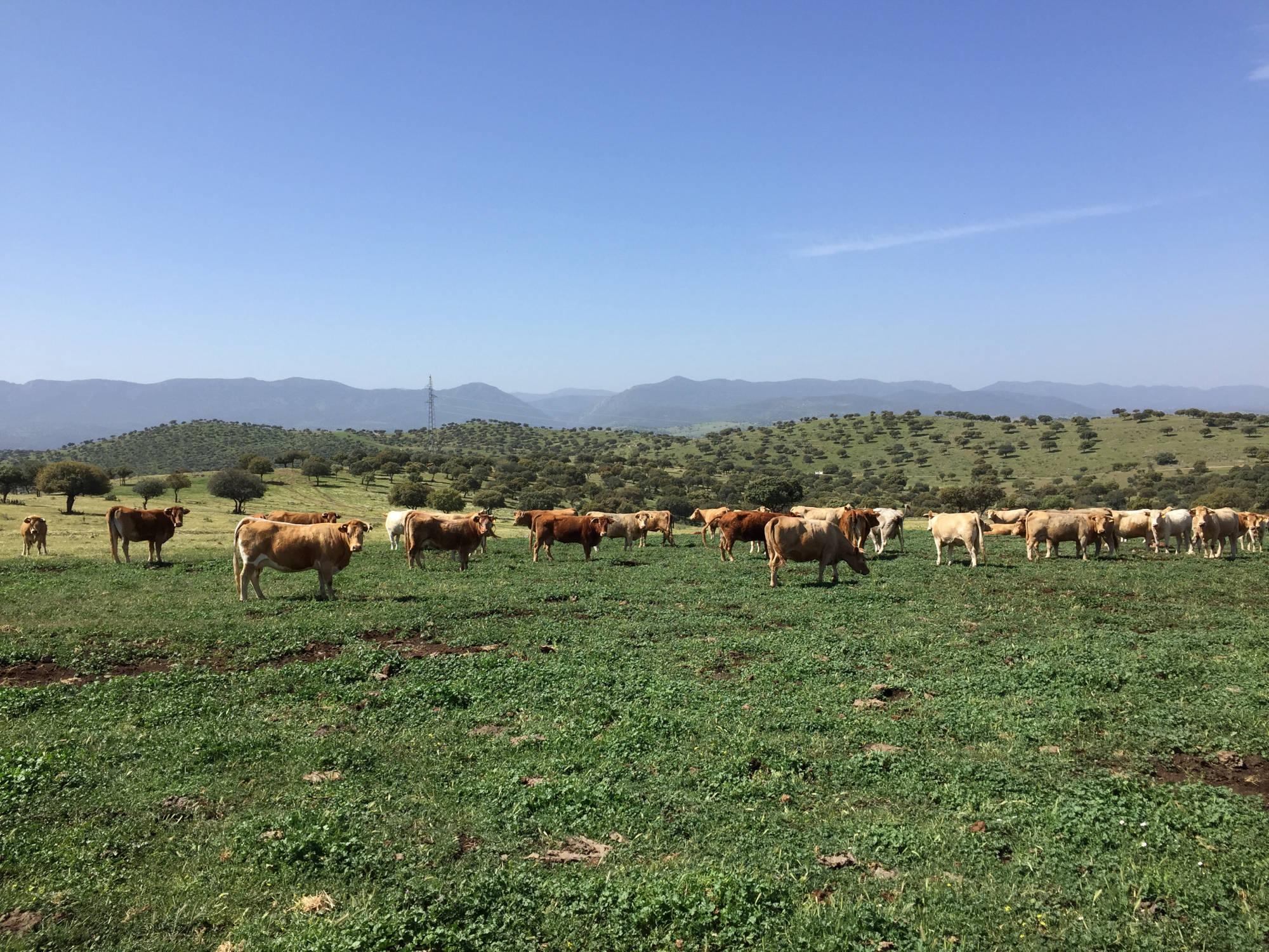vacas-cria2-2000x1500