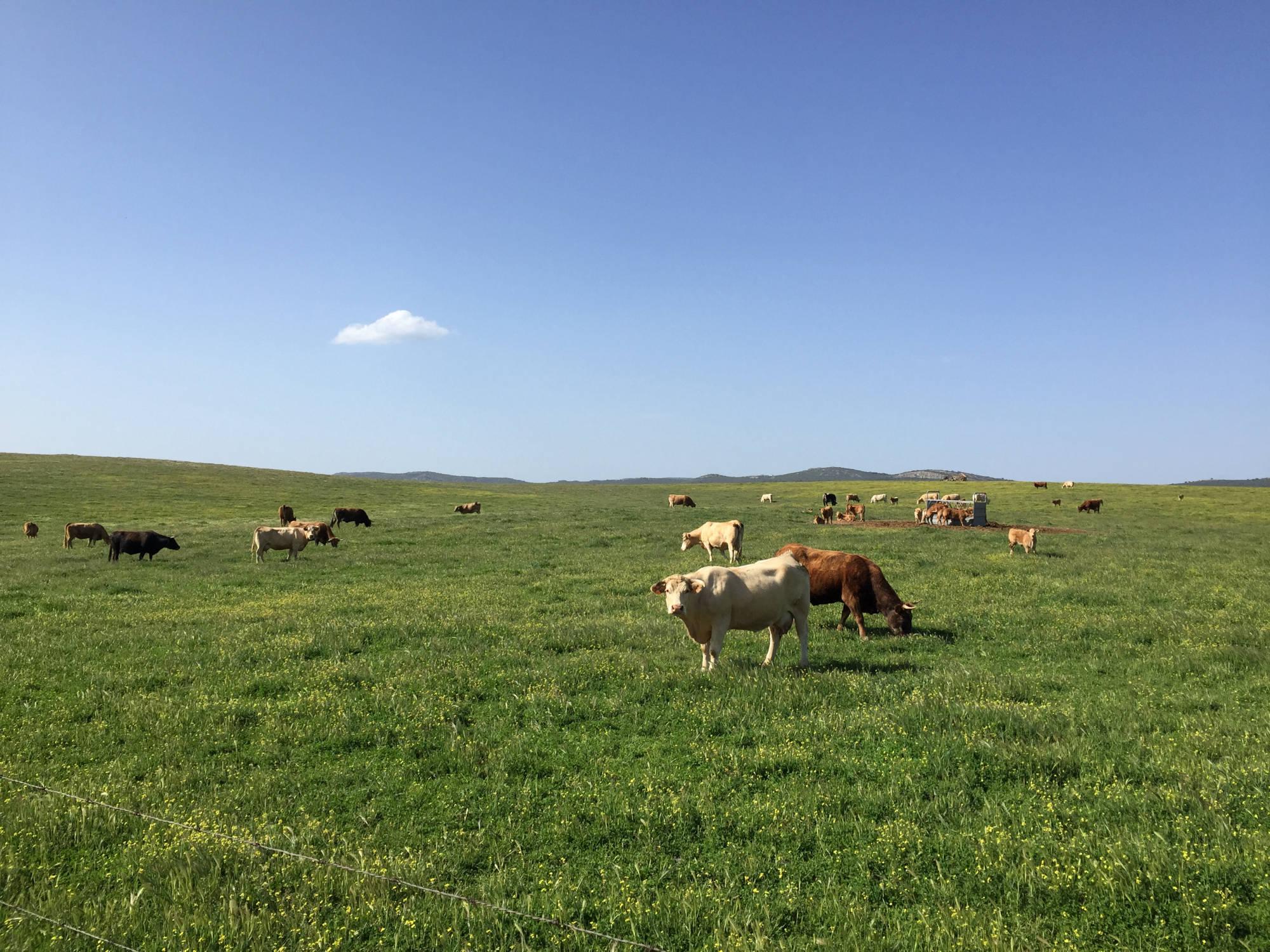 vacas-cria3-2000x1500